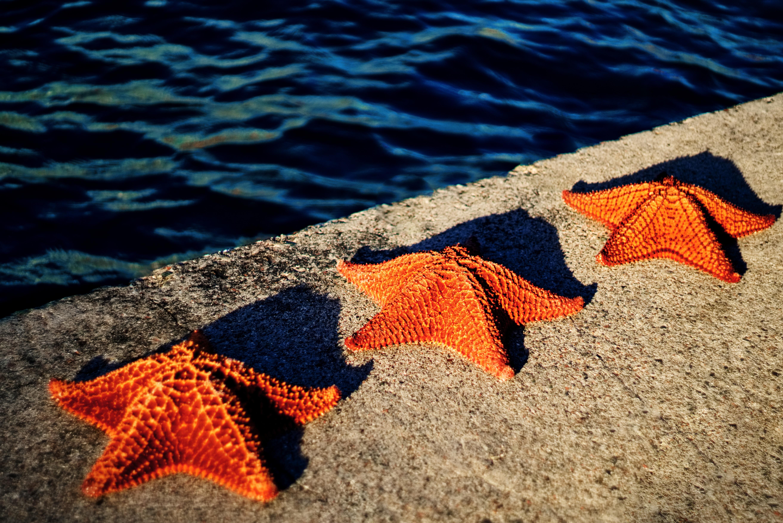 22 Marisa Johnson and her Starfish